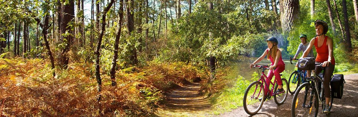 Promenade en forêt...