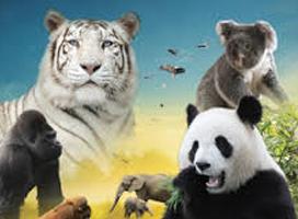 beauval-zoo